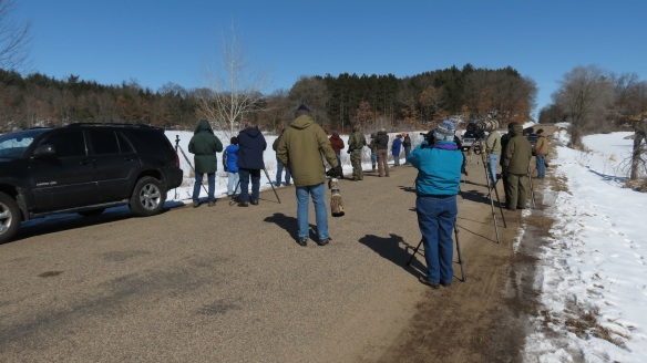 The peloton of birders after the Great Gray Owl