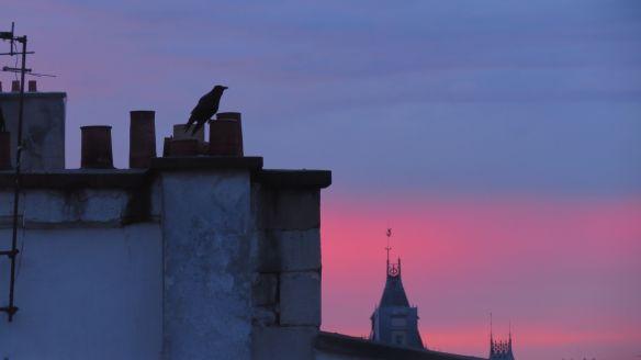 crow at dusk