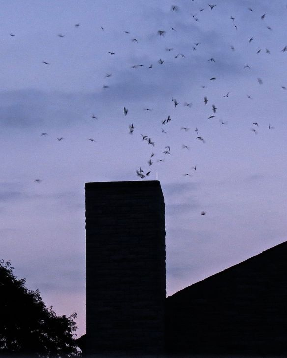 Swifts a bit closer up.